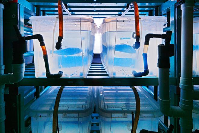 Beholdere med levende fisk inne på havlaboratoriet